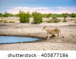 Small photo of A landscape of lioness standing next to a water source, like a dam or river, while looking up, almost like she got a scent in the air.