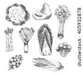 vector vegetable hand drawn...   Shutterstock .eps vector #405932878