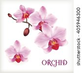 Orchid Flowers Set On The Whit...