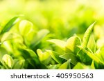 green nature with copy space... | Shutterstock . vector #405950563