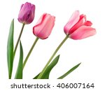 three pink and violet tulips | Shutterstock . vector #406007164