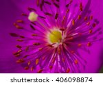 Anthers And Stigma Of Flower