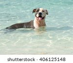 Happy Dog Swimming In The...
