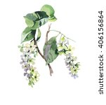 Bird Cherry Branch Watercolor