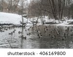 Ducks And Drakes On The Lake I...