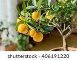 little orange tree in a pot | Shutterstock . vector #406191220