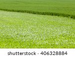 agricultural field on which...   Shutterstock . vector #406328884