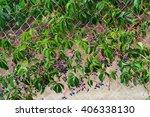 green   Shutterstock . vector #406338130