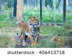 tiger in london zoo  | Shutterstock . vector #406413718