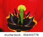 Red Tulip Core Closeup Photo O...