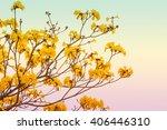 beautiful flowers tabebuia... | Shutterstock . vector #406446310