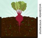 planting beet. composting... | Shutterstock .eps vector #406483144