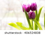 violet tulips on a white... | Shutterstock . vector #406524838