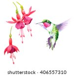 Watercolor Bird Hummingbird...