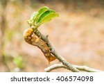brown caterpillar eating desert ... | Shutterstock . vector #406574098