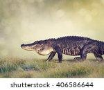 Large Florida Alligator Walkin...
