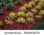 Molinia Caerulea 'variegata' O...