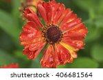 red helenium flower closeup | Shutterstock . vector #406681564
