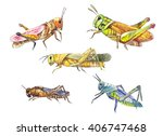 hand drawn locust isolated on...   Shutterstock . vector #406747468