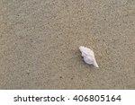 fossil shell on the sand beach | Shutterstock . vector #406805164