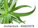 Aloe Vera Plant Isolated On...