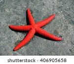 red sea star | Shutterstock . vector #406905658