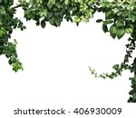 frame of the climbing plant... | Shutterstock . vector #406930009