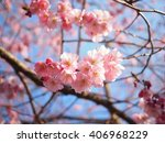 blooming cherry blossoms | Shutterstock . vector #406968229