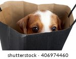 Stock photo cute puppy looking out of shopping bag isolated 406974460