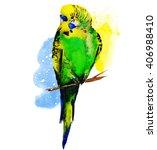 watercolor exotic budgerigar...   Shutterstock . vector #406988410