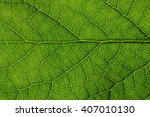 green leaves background. leaf... | Shutterstock . vector #407010130