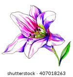 pink white lily flower blossom. ... | Shutterstock . vector #407018263