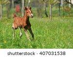Portrait Of A Foal Of Mini Horse