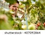 Friendly Man Harvesting Fresh...