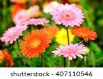 beautiful gerbera flower in... | Shutterstock . vector #407110546