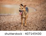 Dog Stand On Dry Land