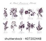 10 vector most poisonous plants ... | Shutterstock .eps vector #407202448