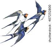 Swallow. Swallow Watercolor....