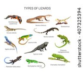 Lizards Vector Set In Flat...