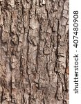 Small photo of Oak bark macro, tree trunk close-up, texture