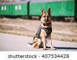 brown german sheepdog sitting... | Shutterstock . vector #407534428