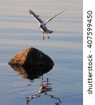seagull on the lake  | Shutterstock . vector #407599450