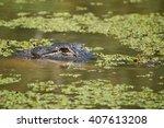 Alligator In New Orleans