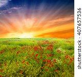 wildflowers field | Shutterstock . vector #407657536