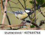 great tit  parus major  on a... | Shutterstock . vector #407664766