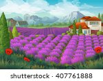 lavender flowers field. nature