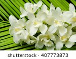 Stock photo white orchid and palm leaf 407773873