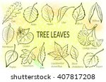 pictograms set  tree leaves ... | Shutterstock .eps vector #407817208