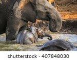 herd of elephants playing in... | Shutterstock . vector #407848030