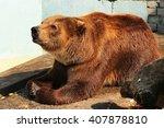 brown bear begging for food ... | Shutterstock . vector #407878810